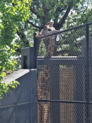 This dude (or dudette?) was going to town on the top of that fence. Nom nom?