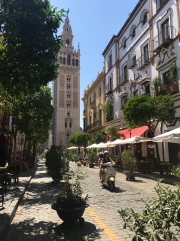 Just the most perfect image. Captures everything that is Spain: streets relatively empty during midday (shops closed, everyone but tourists are home), scooters are a primary form of transportation, all of the tables and umbrellas lining the streets, and in the background is the bell tower for the Cathedral.
