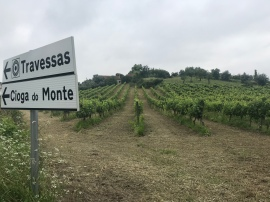 The first of many vineyards I would pass before the day was done.