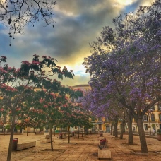 Plaza de la Merced. One of these trees has flowers that only bloom for 3 weeks a year. Very fortuitous for me! But because I'm not sure whether it's the pink or purple flowers, so made sure to capture a photo of both.