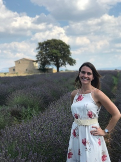 Famous lavender fields in south of France.