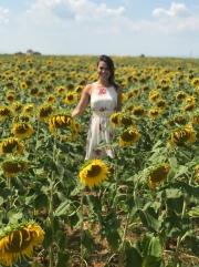 Sunflower fields!