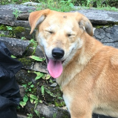 Happy dog! Best hiking buddy ever.