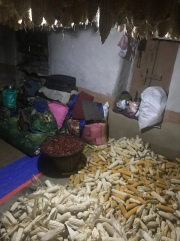 "After corn was picked (on any given day), it then went to ""live"" in Chhetra & Sharmela's room. There's also a tub of large chilies (from their garden) they are drying."