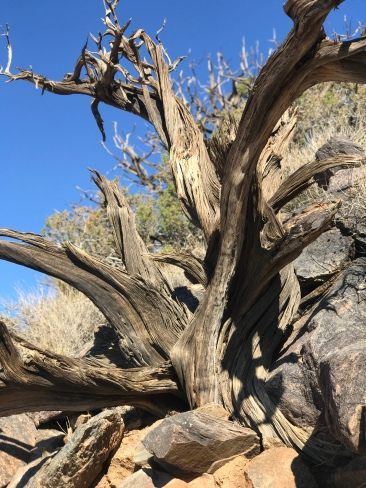 The trees in Joshua Tree reminded me of the beauty in death, in the cycle of life.