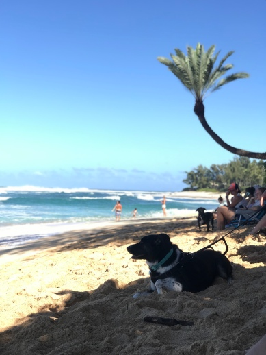 Dogs are all over beaches in Hawaii! Makes my heart so happy!