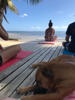 There are so many dogs at this resort, and I LOVE it. This little girl decided to join us for yoga one day.