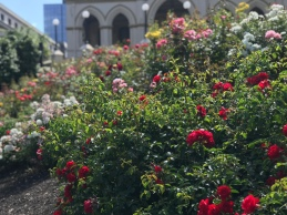 Down to its rose garden.